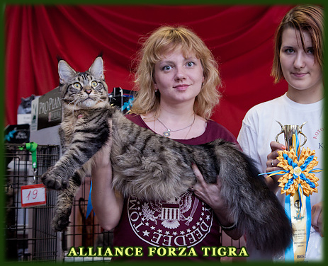ALLIANCE FORZA TIGRA