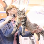 ALLIANCE FORZA TIGRA - Best Kitten of Breed, 2 NomBIS